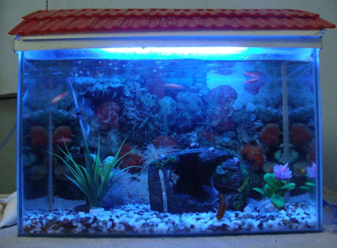 fish tank picture - tank with light