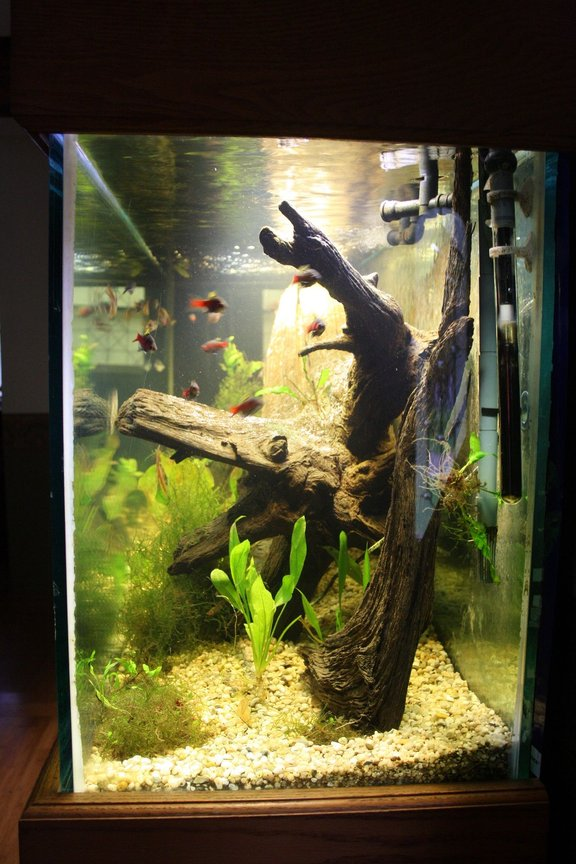 fish tank picture - I love looking at aquariums from the side. Here is my 150 from the right side. At 6 feet long it looks sooooo deep!