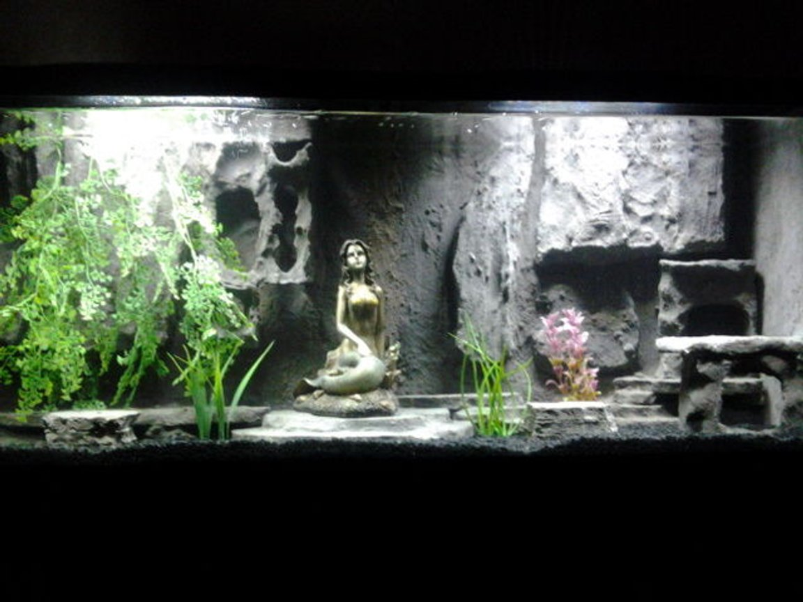 fish tank picture - MY TANK