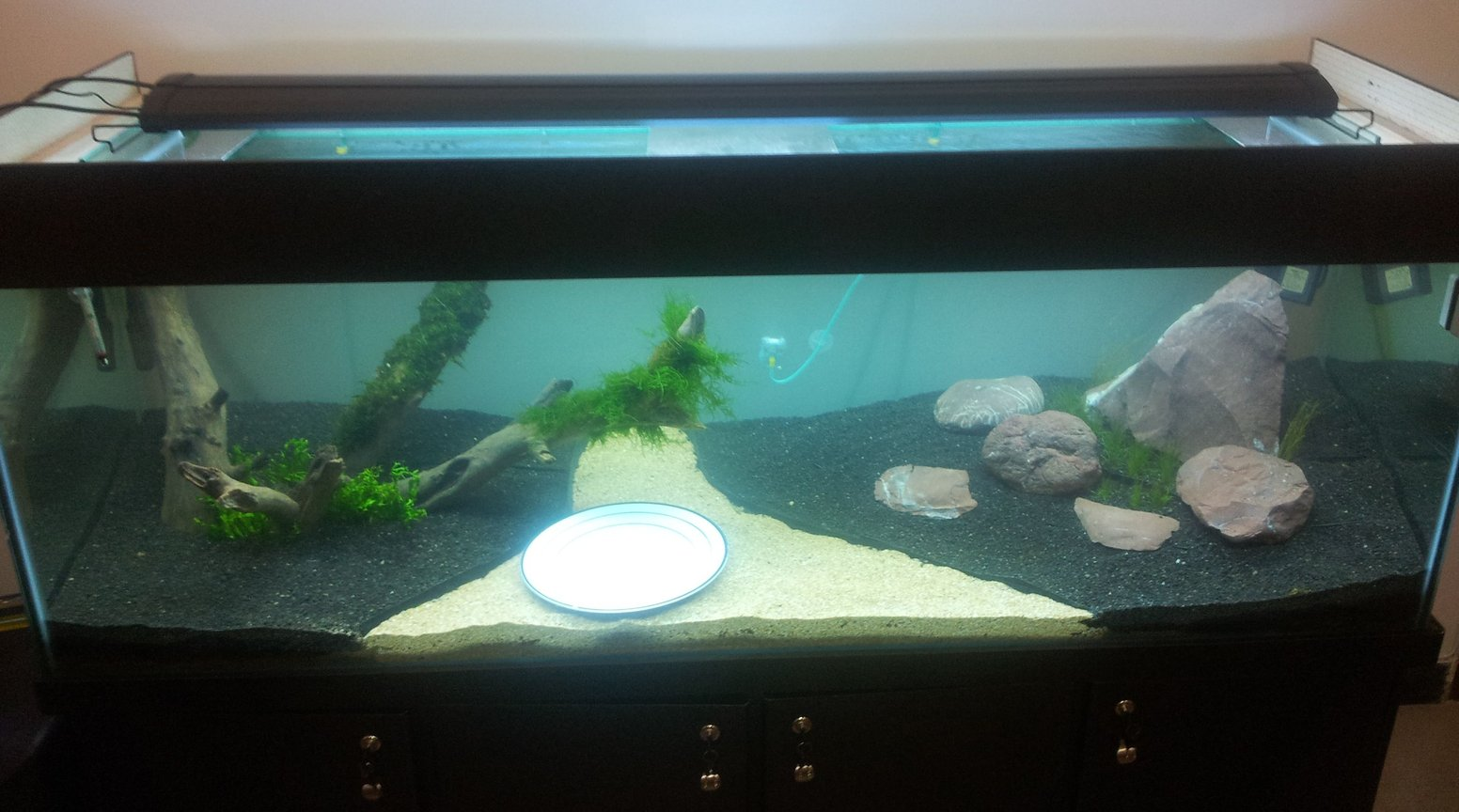 fish tank picture - In the Making - 5