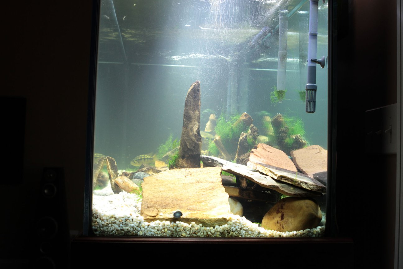 fish tank picture - R Side