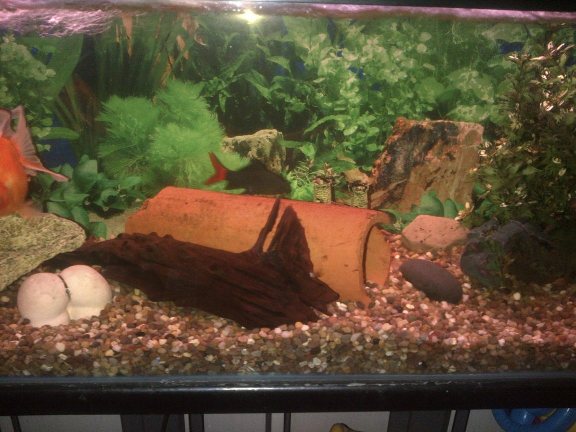 fish tank picture - Middle