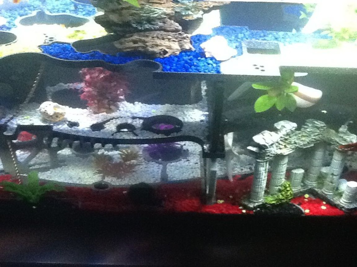 fish tank picture - Back side