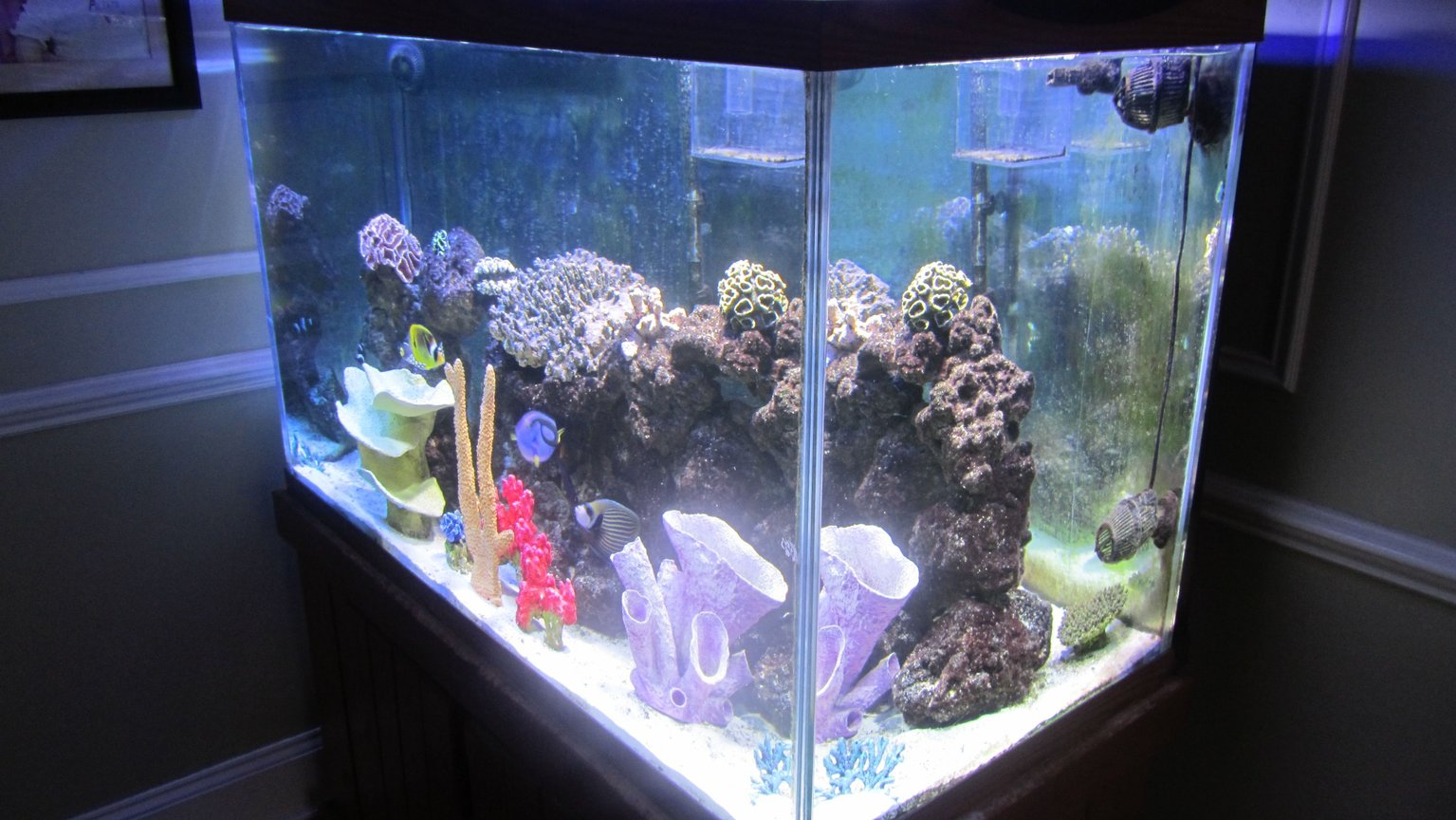 fish tank picture - Wide View