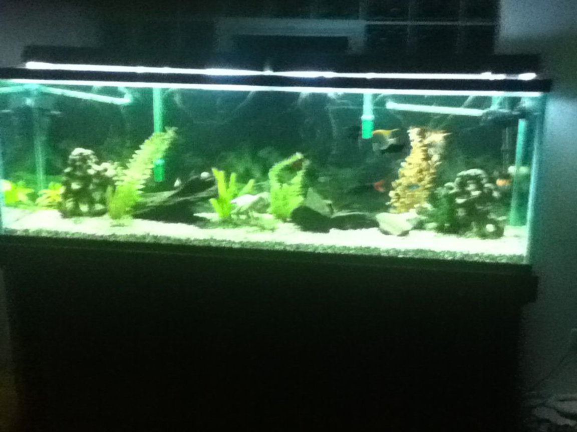 fish tank picture - 135 still growing