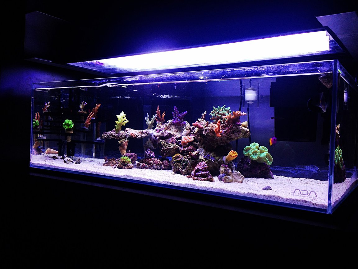 fish tank picture - Left side
