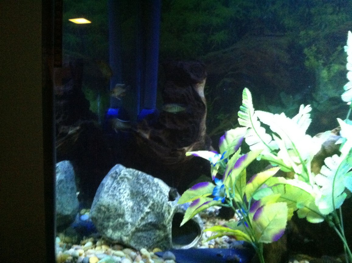 fish tank picture - Fish3