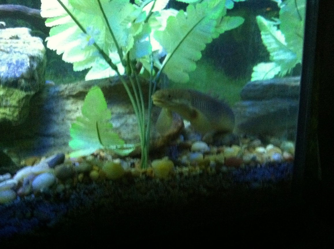 fish tank picture - Fish5