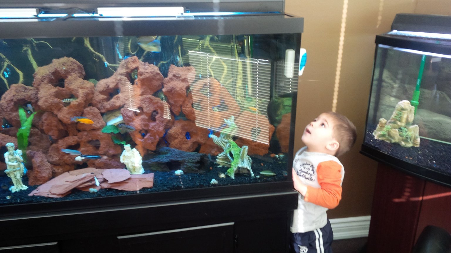 fish tank picture - My son's first reaction to seeing his first aquarium ever. I think he has the bug like his dad