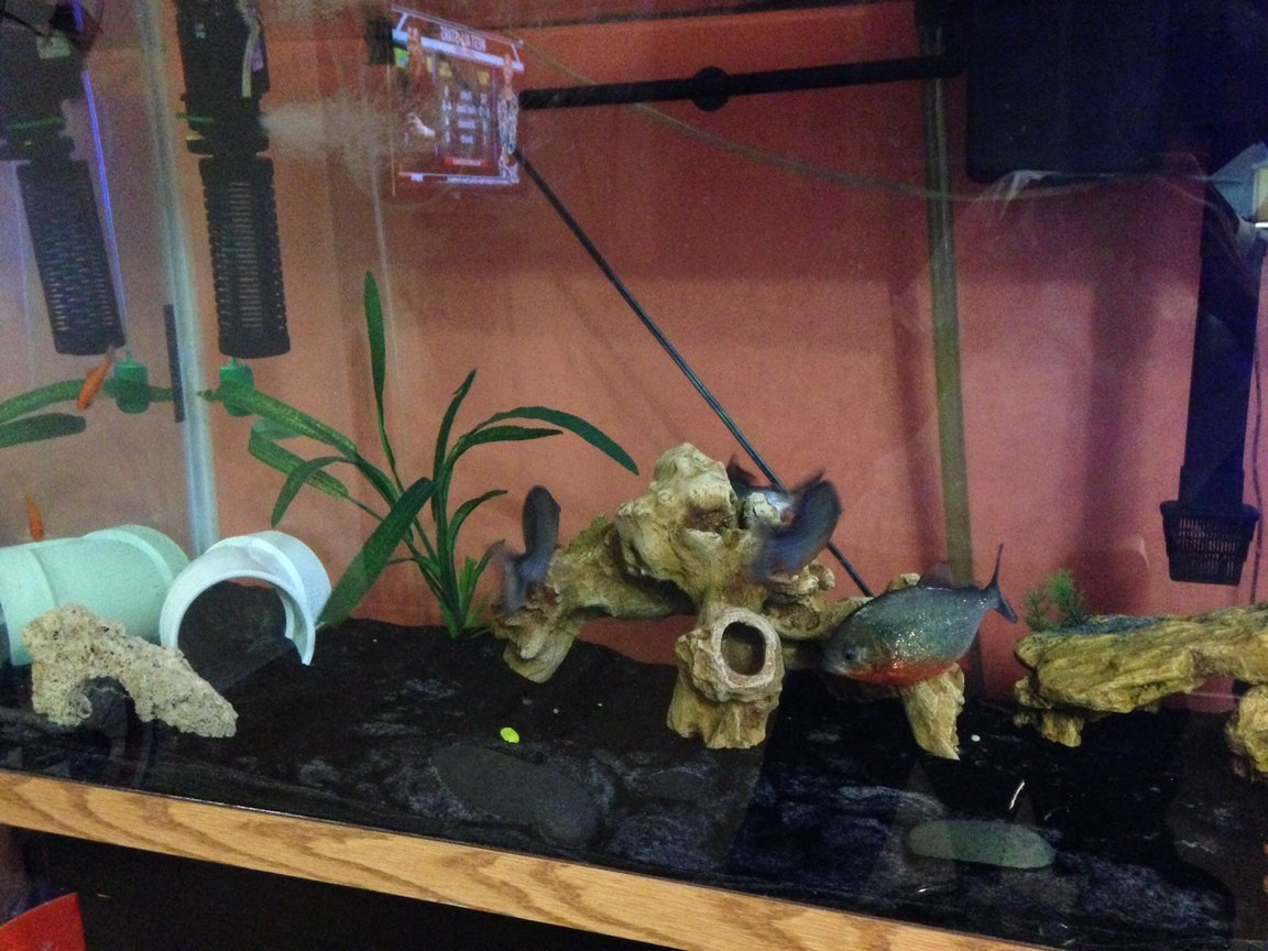 fish tank picture - 90 Gallon Front