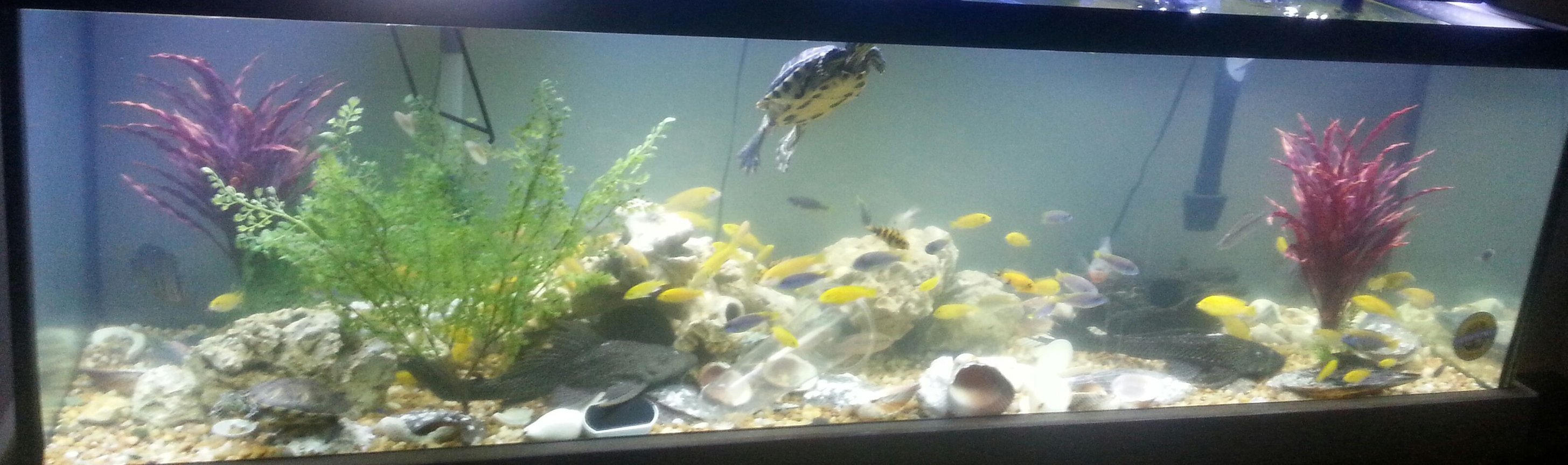 fish tank picture - Fun