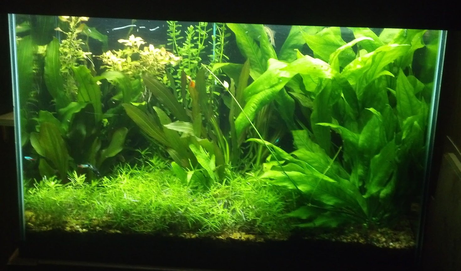 fish tank picture - 70 gal