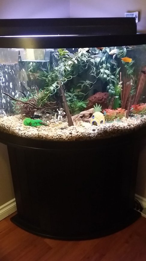 fish tank picture - Pic of entire aquarium and cabinet stand. I got the whole thing including canopy for $400.