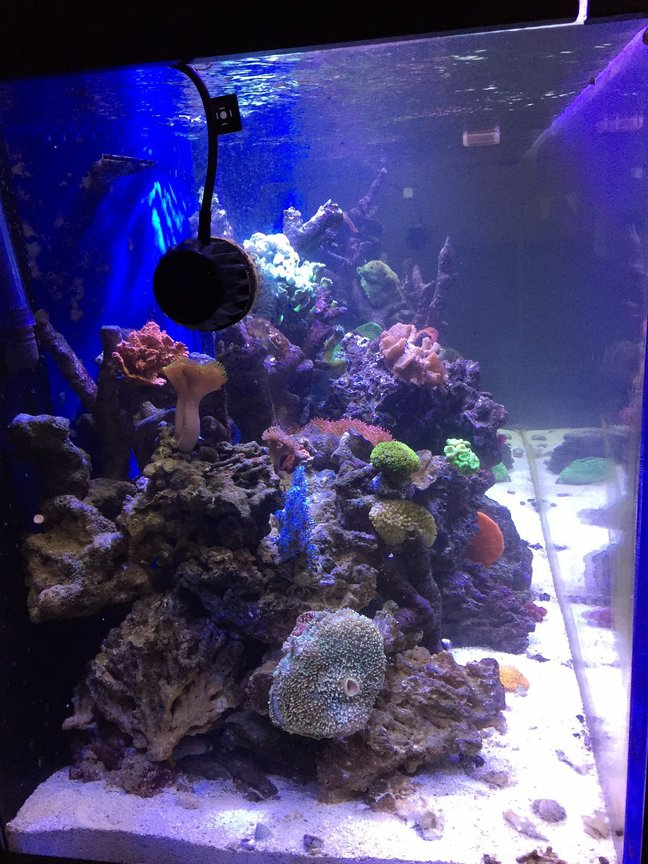 fish tank picture - Side view mp40