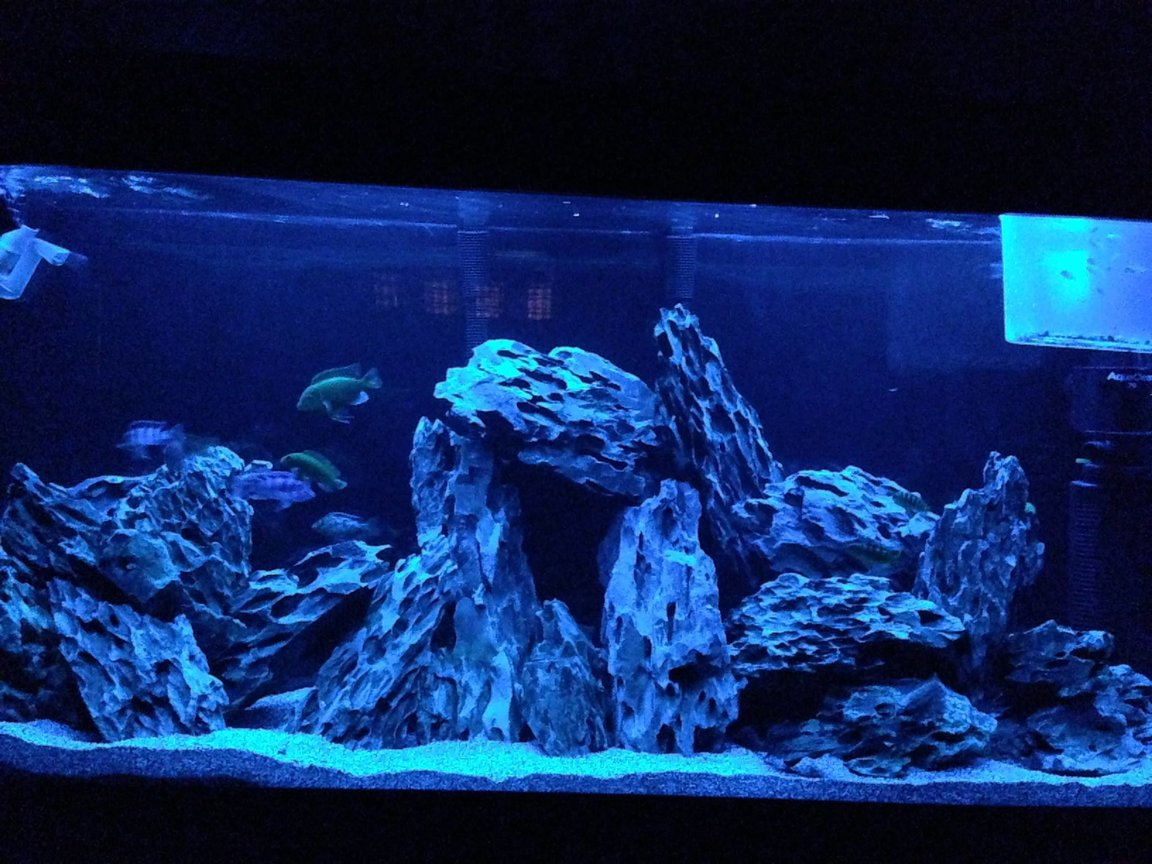 fish tank picture - GO LEAFS GO FOR LIFE!