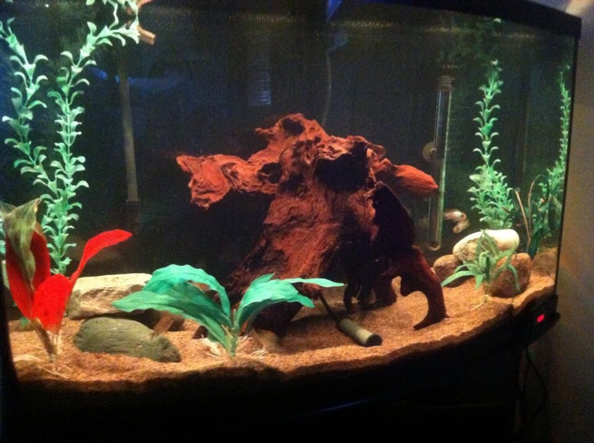 fish tank picture - Here is a better look