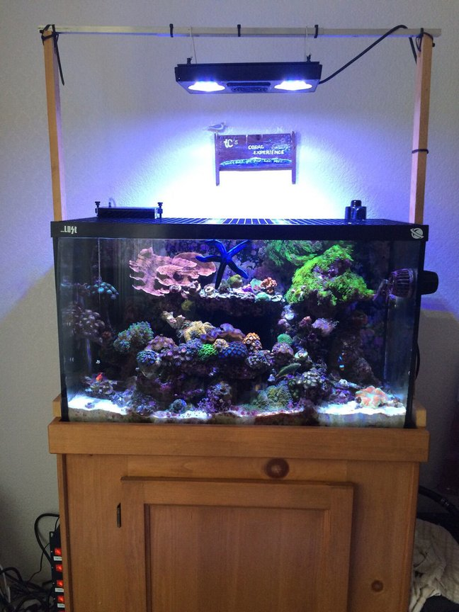 fish tank picture - Radion lights
