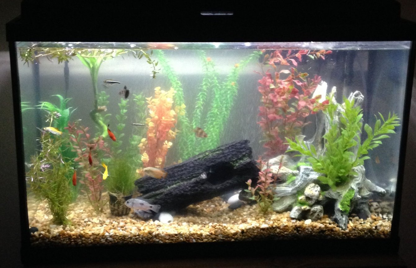 fish tank picture - Updated 29 gal community tank