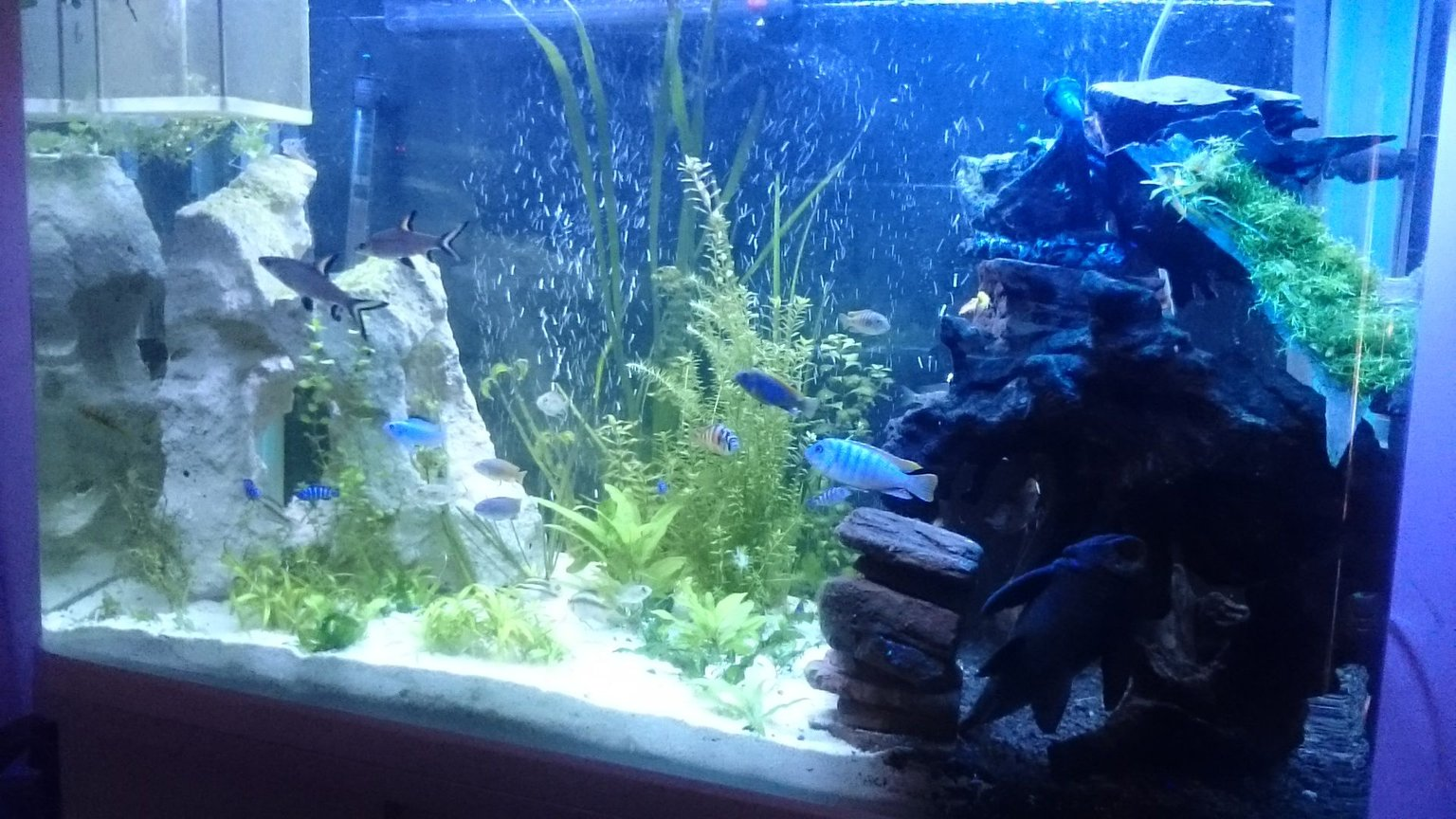 fish tank picture - African 82gallon tank
