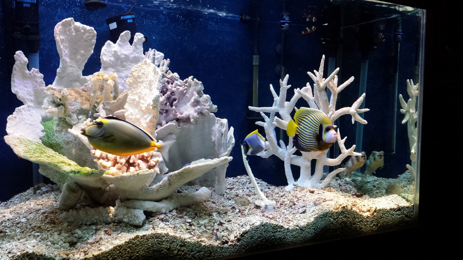 fish tank picture - I will try and add more pics w better camera soon