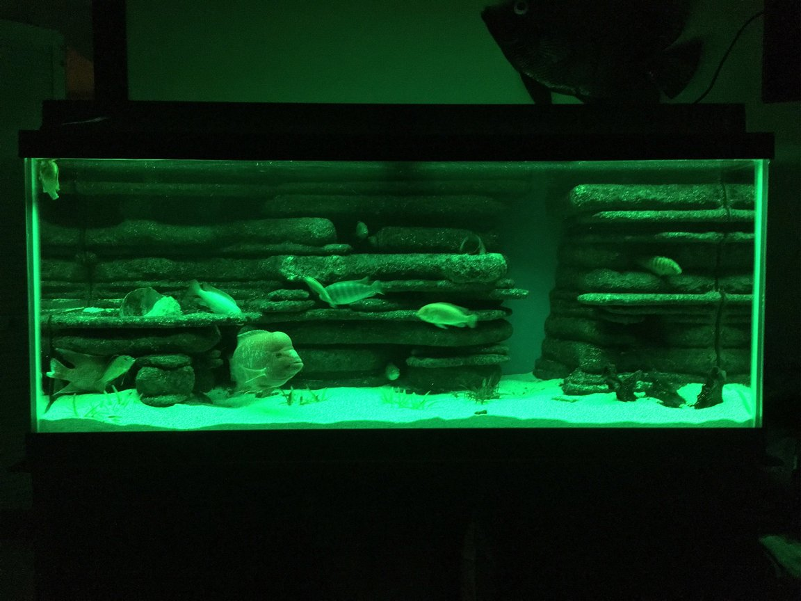 fish tank picture - Green led