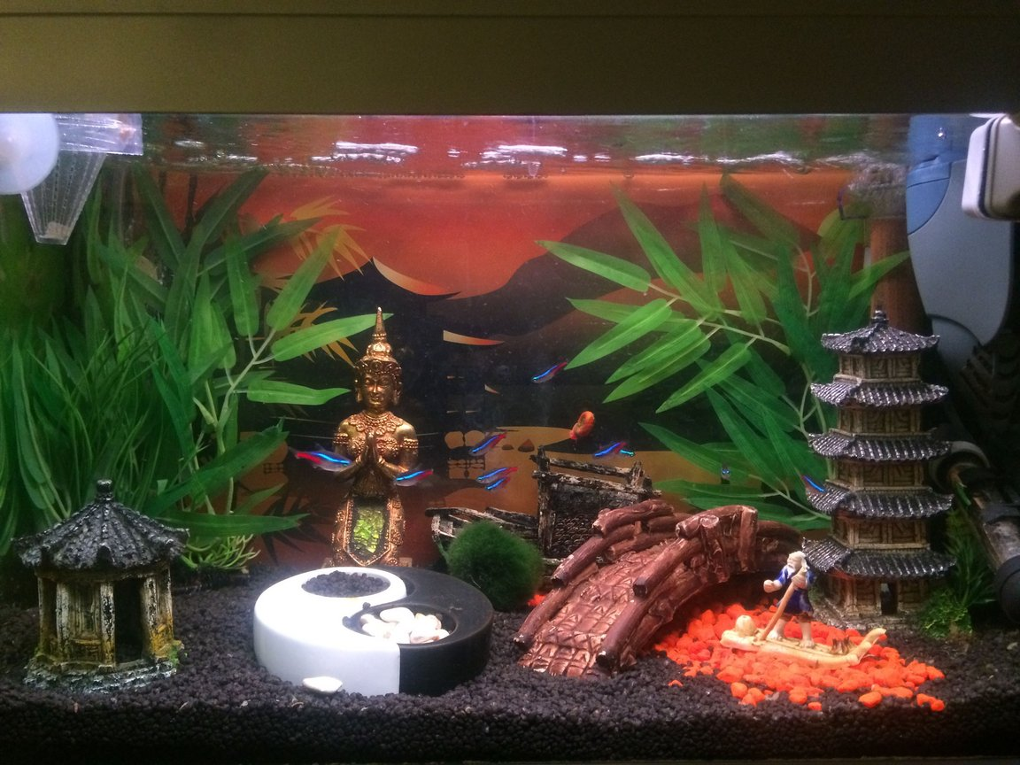fish tank picture - My Buddha themed tank