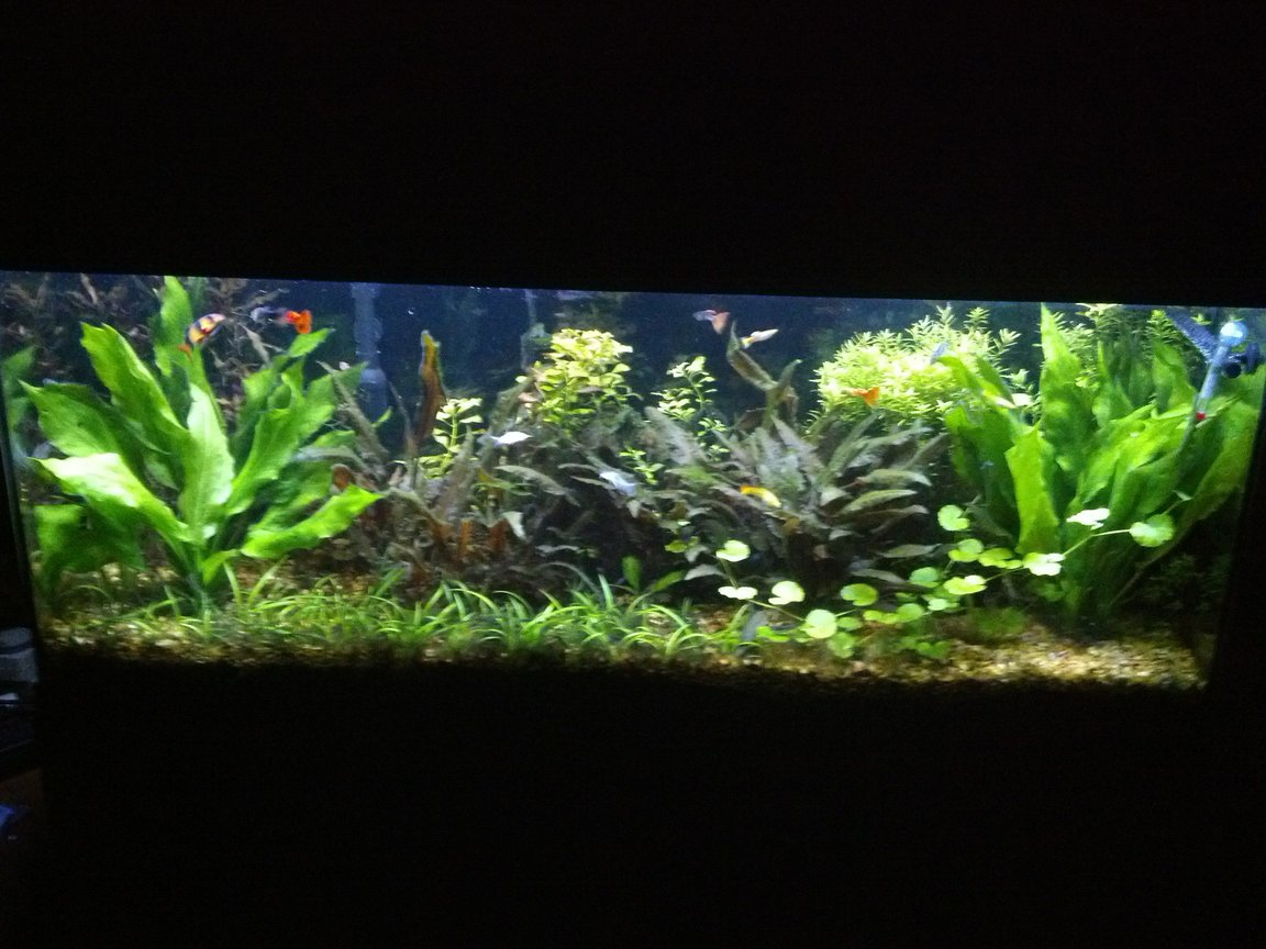 fish tank picture - 55 gal led lighting pressurized co2
