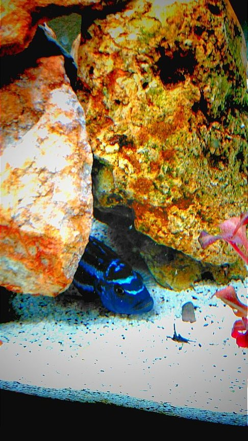 fish tank picture - ...