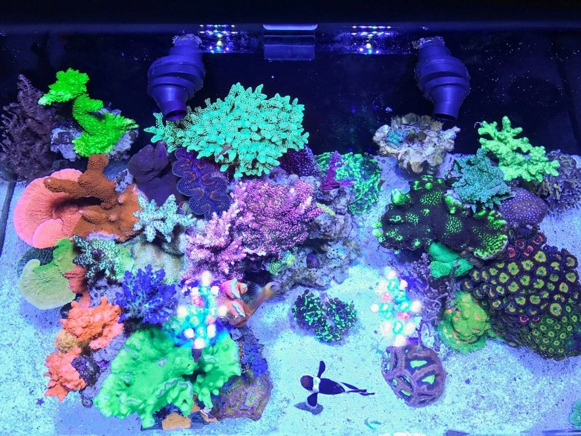 fish tank picture - 20 gallons. Top down