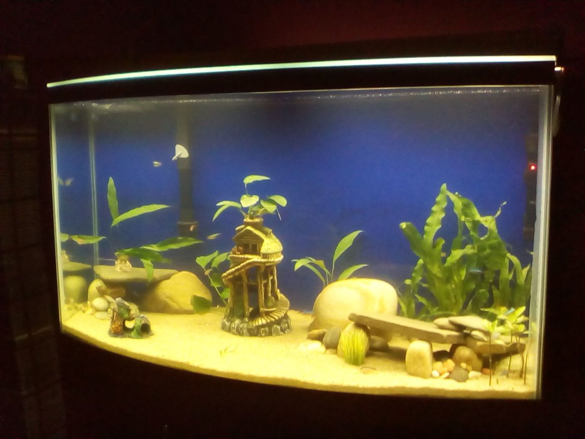 fish tank picture - 46gal Bowfront Tank