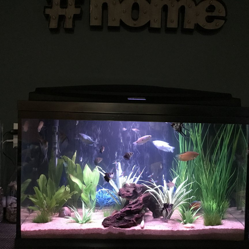 fish tank picture - Additional photo.
