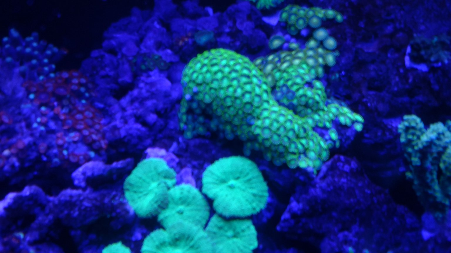 fish tank picture - Zoe's and shrooms, the green kind!