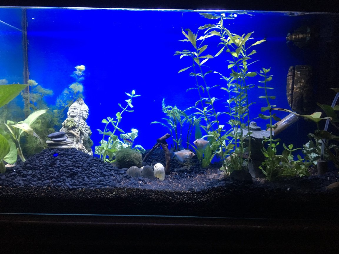 fish tank picture - New setup, grass needs growing