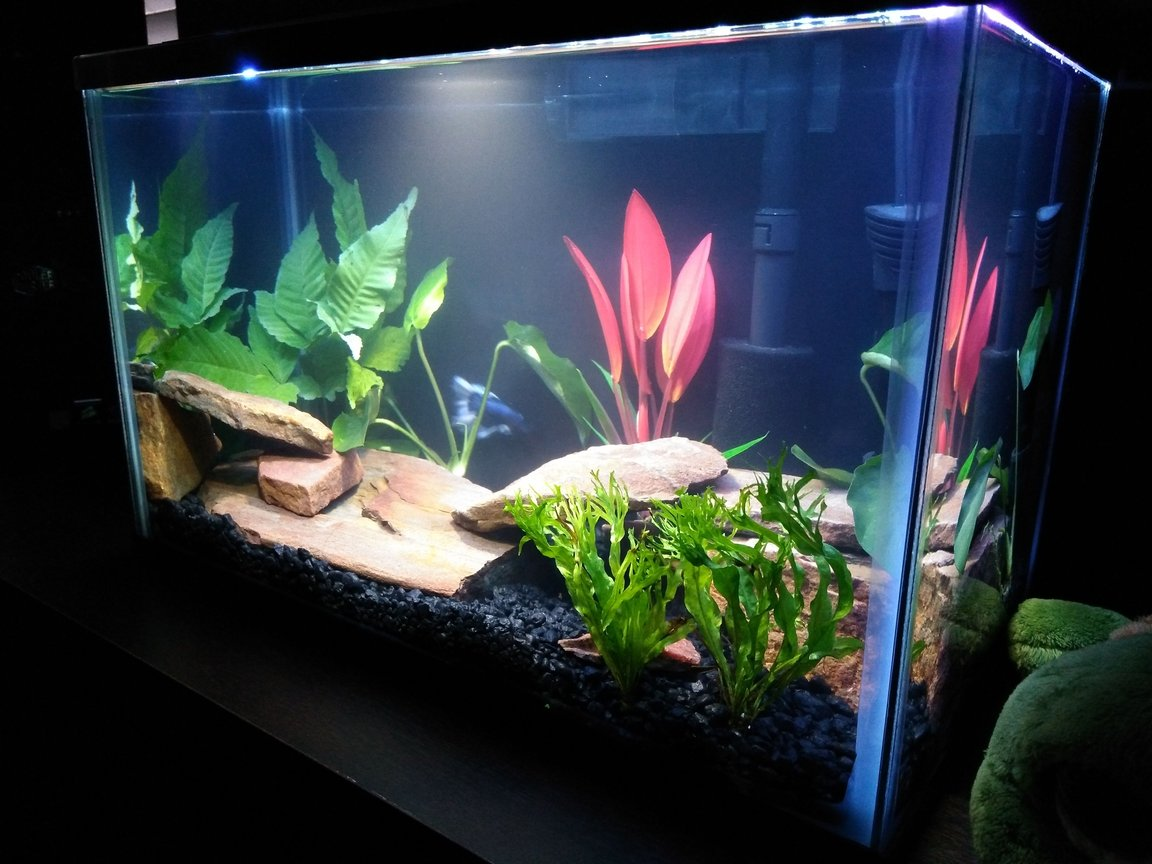 fish tank picture - Added a red silk plant