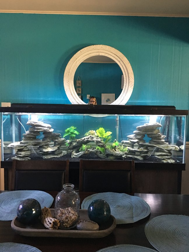 fish tank picture - My 125 uncycled tank (for now) Cichlids will be much happier in this tank I am sure