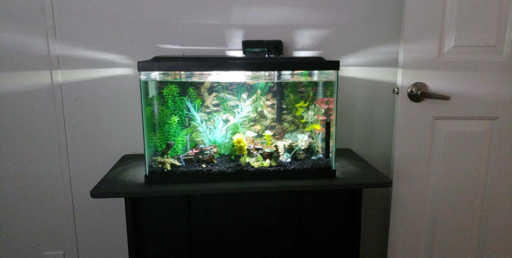 fish tank picture - My 10 gallon with a whisper 5-15 gallon hob filter, tetra heater, artificial plants and ornamental shipwrecks.