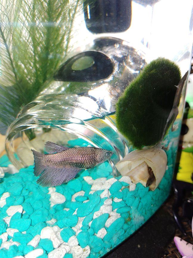 fish tank picture - My beta needs a name!