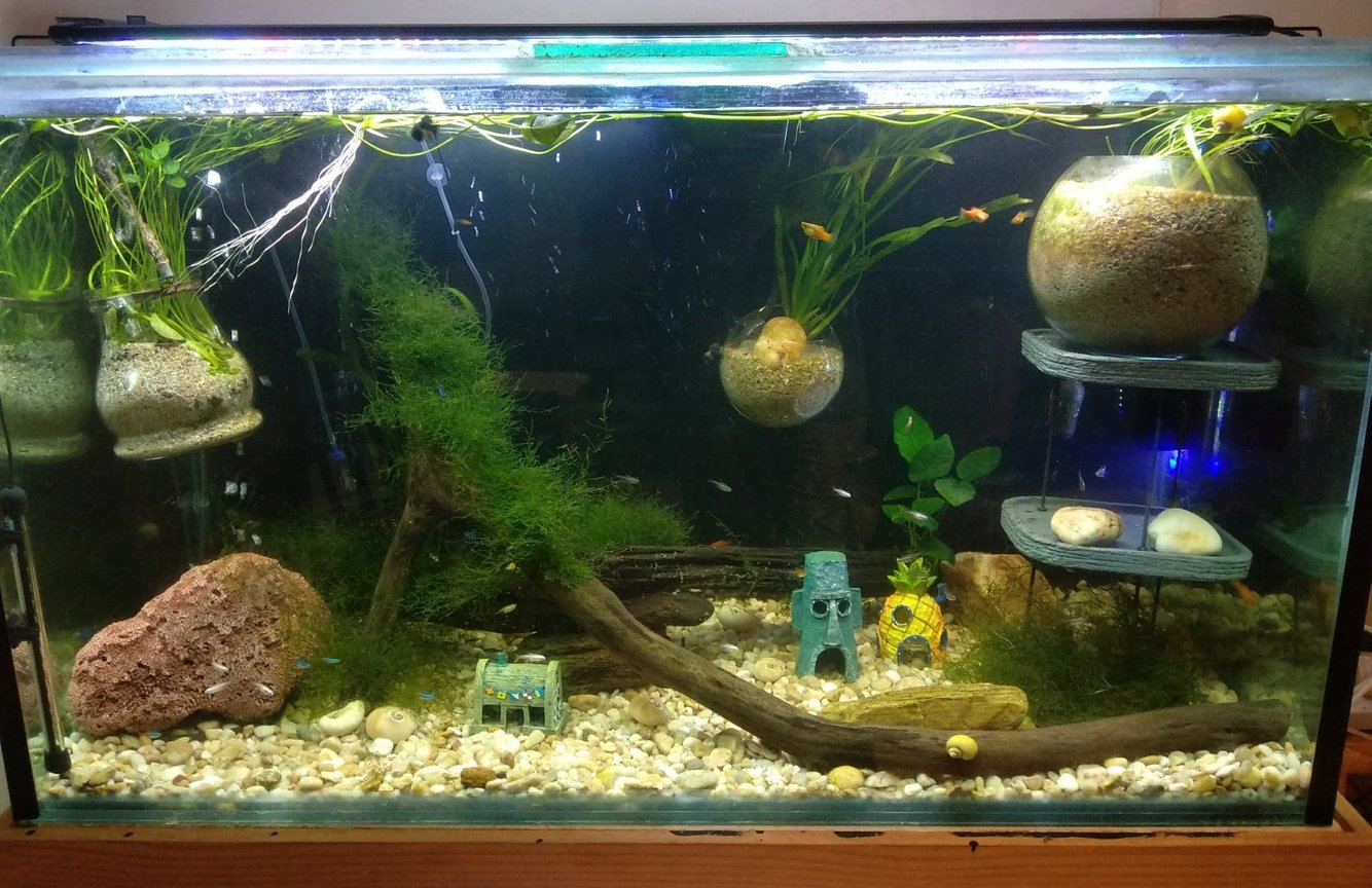 fish tank picture - Main Tank