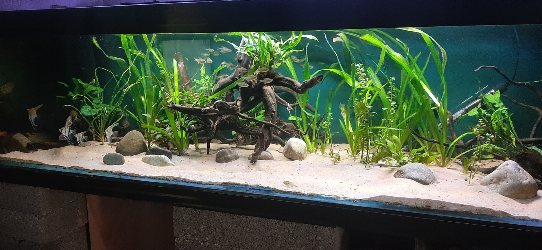 fish tank picture - Side angle