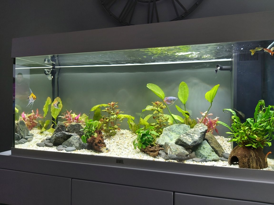 fish tank picture - 5th November