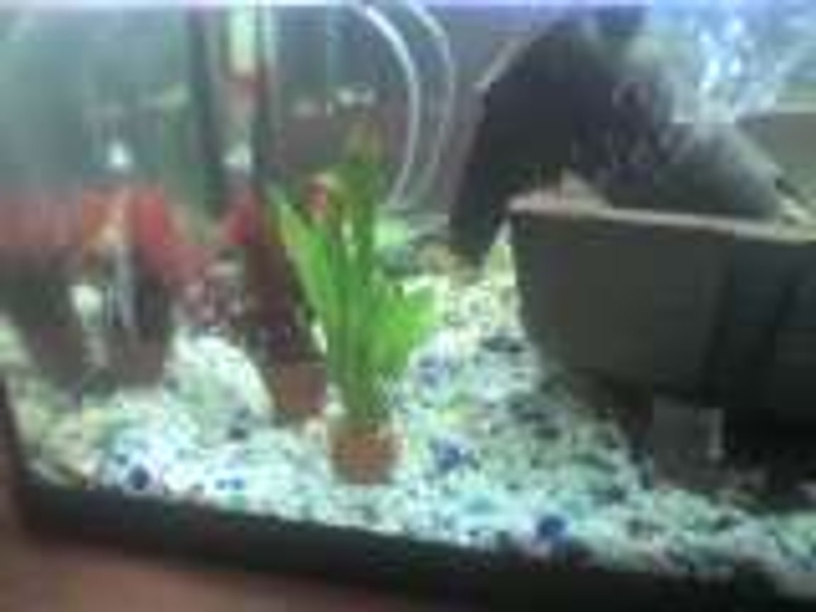 fish tank picture - a