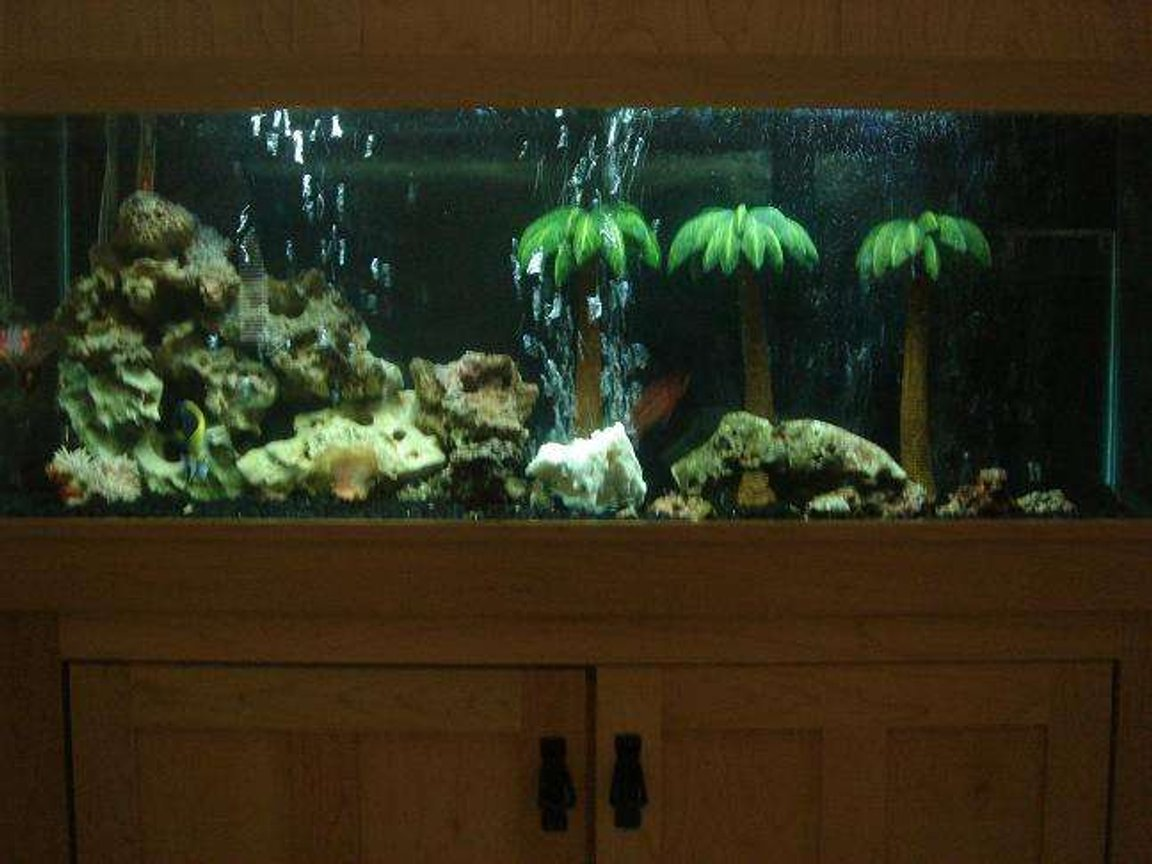 fish tank picture - tank again