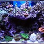 fish tank picture - 120 SPS tank