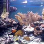fish tank picture - my aquarium12
