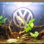 fish tank picture - (2weeks)- September 2007