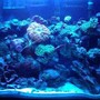 fish tank picture - looners on