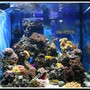 fish tank picture - Aqua Medic Chromis - 8 Months In