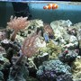fish tank picture - Clownfish