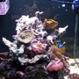 fish tank picture - pic3