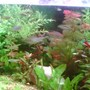 fish tank picture - view add1